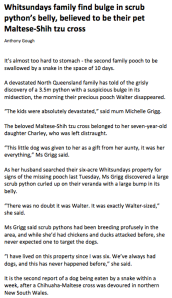 Whitsundays family find bulge in scrub python's belly, believed to be their pet Maltese-Shih tzu cross