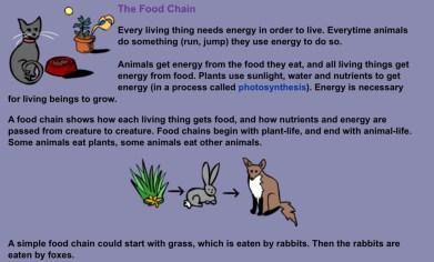food chain image 1