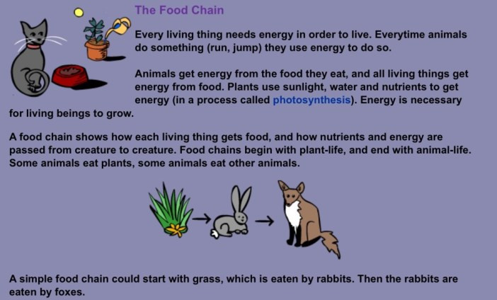 food chain image 1
